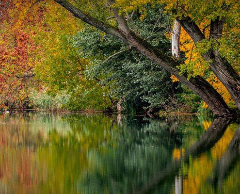 Los colores del otoño - Blog Pinturas Noroeste Madrid